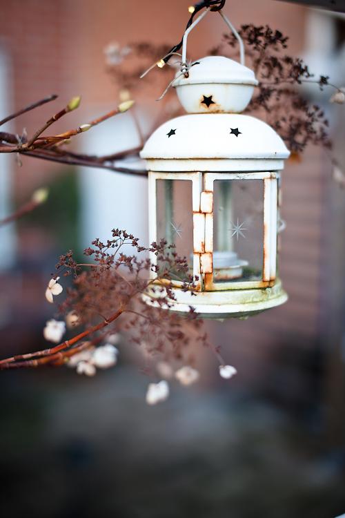 Vinterljus. foto: Torbjörn Lagerwall