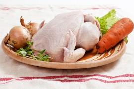 kyckling. foto: Torbjörn Lagerwall