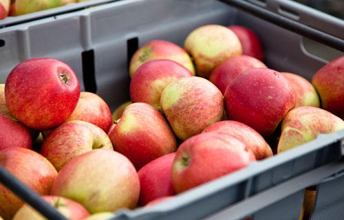 apple. Foto: Torbjörn Lagerwall