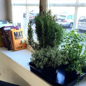 fönster med kryddväxter